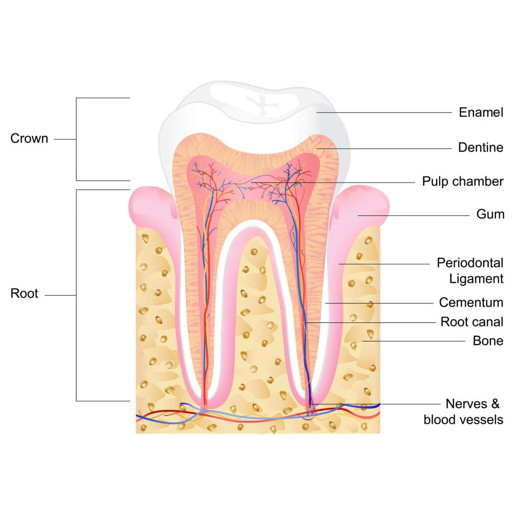 Where can I get a Root Canal Charleston SC?